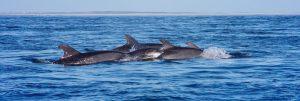 Mammifères marins de nos côtes ©Océanopolis