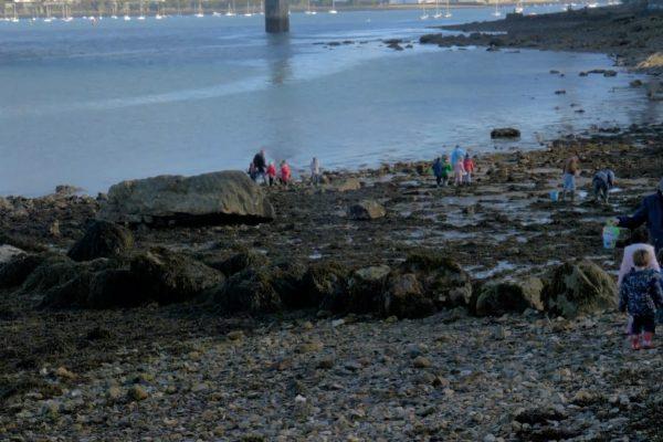 École du Forestou : soutenir des actions développées  dans le cadre d'une aire marine éducative