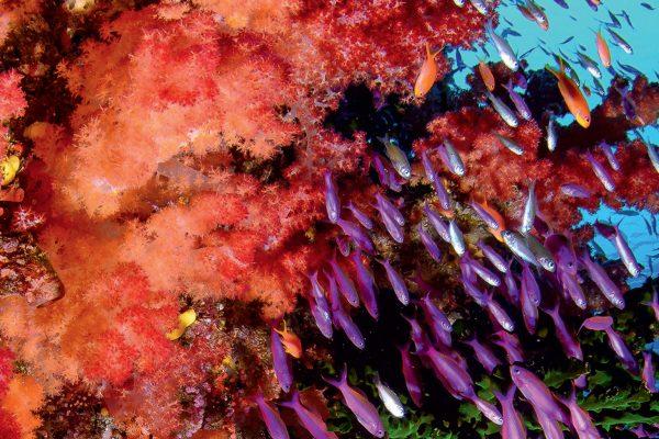Dossier pédagogique [ECO]systèmes&co : les récifs coralliens